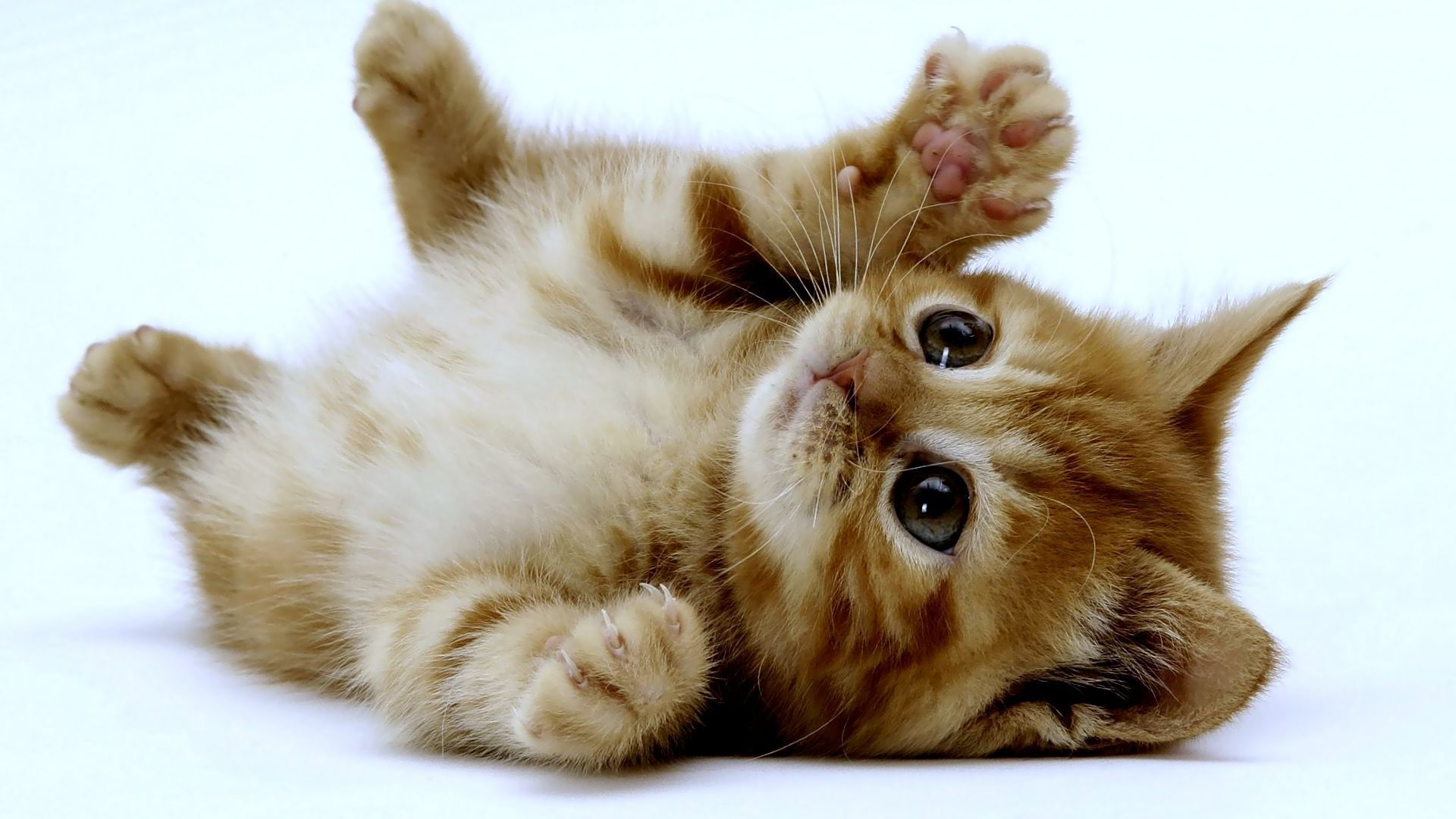 Image Cute Kittens 1 Wallpaper HD Just Dance Wiki