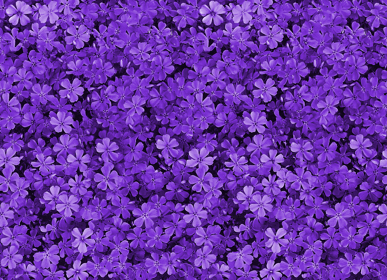 Tumblr Static Pretty Field Of Purple Flowers