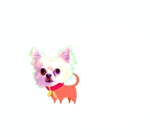 Chiwawa Dog Bq