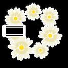 FlowersSkin
