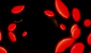 Fogos de Artifício00146