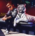 Justin Bieber with a tiger