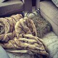 Justin Bieber sleeping in living room