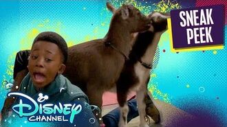 Goat Yoga 🐐 Just Roll With It Disney Channel