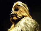 Wookiee-7497
