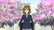 Yui under cherry trees