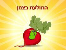 K kabbalah znon worm