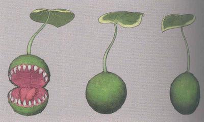 Tree Spirit Yoma