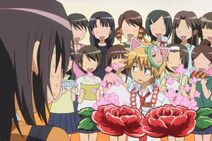 Flower bloom Usui & Misaki