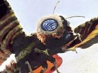 File:Mothra.jpg..jpg
