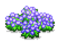 Hydrangea (Grand Prix Story 2)