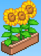 Sunflower (Basketball Club Story)