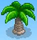 Coconut Palm (Basketball Club Story)
