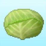 PH crop cabbage