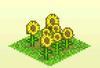 Pocket Harvest - Sunflowers