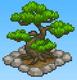 Pine Tree (Basketball Club Story)