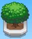 Sprawling Tree (Basketball Club Story)