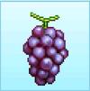 PH crop grape