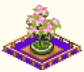 Bonsai - The Sushi Spinnery.png