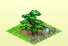 Pocket Harvest - Pine Trees