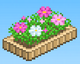 Cosmos Flowerbed (Basketball Club Story)
