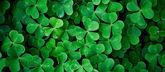 Зелёная статья