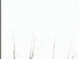 Anguis Femineus