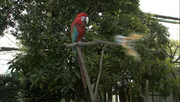 Macaw before transform