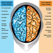 Brain R and L