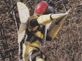 Bee Beastman