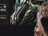 Salamander Amazon