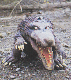 Crocodile Beastman