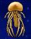 Jellyfish Yummy AKRG