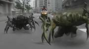 Coleoptera crawling