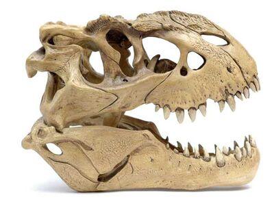 V-rex 08