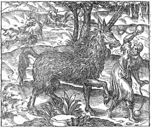 Image of Pirassouppi