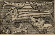 Olaus Magnus Xiphia Monoceros & Serra