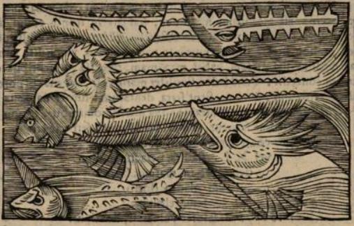 File:Olaus Magnus Xiphia Monoceros & Serra.png