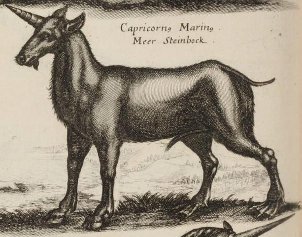 File:John Jonston Capricornus Marinus.png