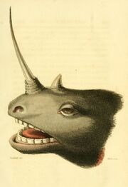 John Campbell head of a unicorn