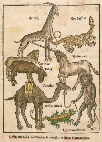 File:Bernhard von Breydenback Peregrinatio.jpg