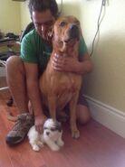 Leo and Ringo Camilas dogs (4)