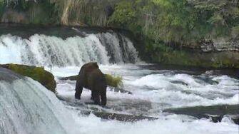 Bear Cam - Brooks Falls Cam 06-28-2017 18 00 02 - 18 59 56