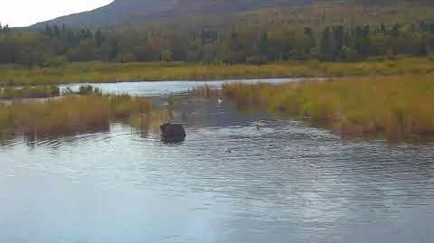 410 in Lower River 09 17 2017 video by Brenda D