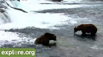 Bear 856 Displaces 747 from the Jacuzzi Explore Nature Cam June 2018 video-0