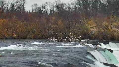 Brooks Falls Brown Bears Cam 10-18-2017 19 00 10 - 20 00 00 Explore Recorder video