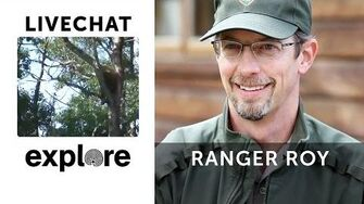 Bear cub in a tree with Ranger Mike EXPLORE LIVE CHAT, 7 18 2014
