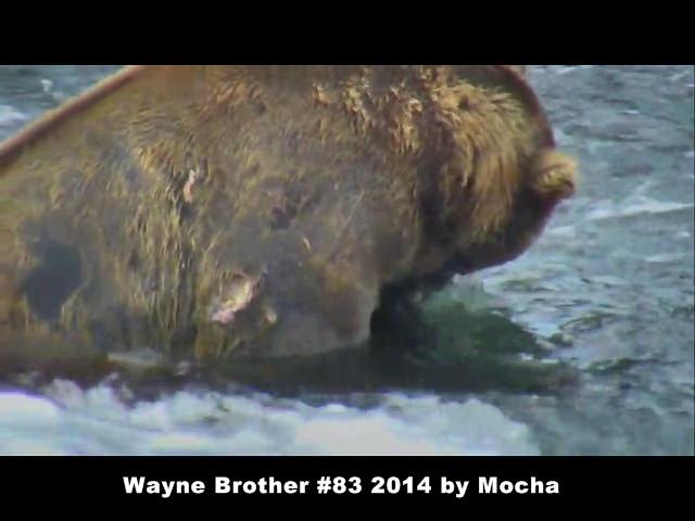 Mocha Wayne brother 83