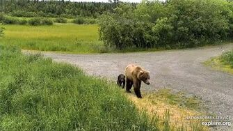 28 Jun 2020 Unknown Sow and Cub, video by mckate