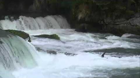 Brooks Falls - Katmai National Park, Alaska Cam 09-14-2015 16 07 42 - 16 12 37